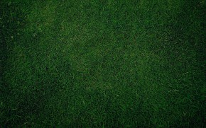 Picture grass, green, background, lawn