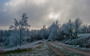 Picture winter, frost, road, grass, trees, nature, frost