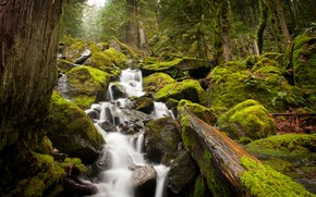 Picture forest, stream, stones, moss, fern