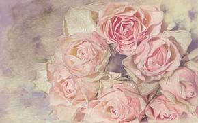 Picture drops, roses, treatment, bouquet, lie