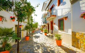Wallpaper summer, trees, street, Spain, Spain, Estepona, Iberian Peninsula