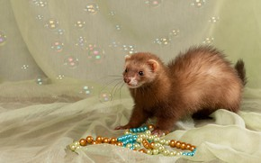 Picture look, bubbles, fabric, beads, face, ferret, composition, home, ferret