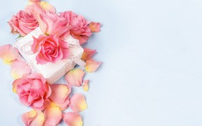 Picture gift, roses, petals
