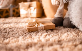 Picture macro, gift, carpet, toy, interior, bow, gift, bow
