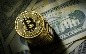 Picture blur, dollar, coin, dollar, coin, bitcoin, bitcoin