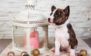 Picture look, balls, pose, holiday, candle, dog, baby, Christmas, flashlight, lantern, puppy, New year, Mat, bricks, …
