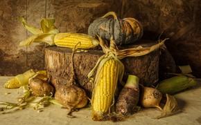 Picture corn, harvest, pumpkin, still life, vegetables, autumn, still life, pumpkin, corn, vegetables, harvest