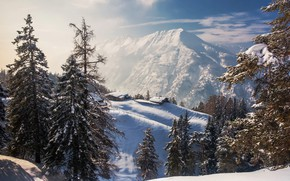 Picture forest, trees, landscape, mountains, nature, home, ate, slope, Alps, snow, Torsten Muehlbacher