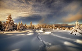 Picture winter, forest, the sky, clouds, light, snow, sunset, traces, nature, in the snow, trail, dal, …