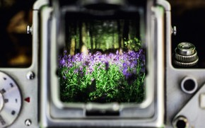 Picture flowers, nature, bluebell wood