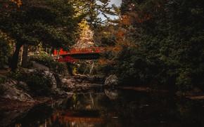 Picture photo, Nature, Bridge, Trees, Japan, Water channel, Bridge on Miyajima Island