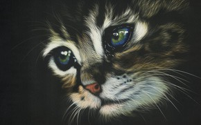 Picture look, kitty, background, black, muzzle