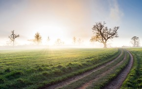 Picture road, field, fog, morning
