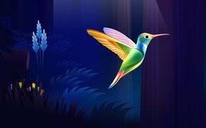 Picture colorful, dark, nature, bird, wood, wings, rendering, Colibri
