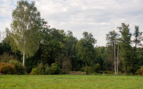 Picture trees, Forest, September, Yasnaya Polyana