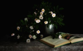 Picture flowers, roses, bouquet, book, white, black background