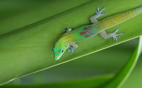 Picture nature, sheet, lizard