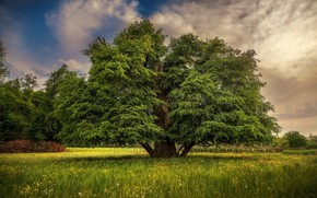 Picture summer, grass, clouds, tree, meadow