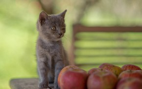 Picture grey, apples, baby, kitty, bokeh