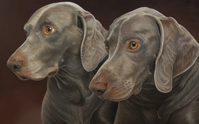 Picture dogs, background, pair