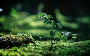 Picture photo, moss, branch, bokeh