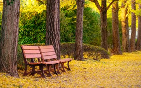 Picture autumn, leaves, trees, bench, Park, park, autumn, leaves, tree, bench, fall
