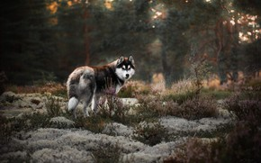 Picture forest, landscape, nature, animal, moss, dog, grass, dog