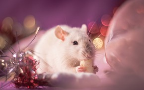 Picture look, light, decoration, background, pink, holiday, eyes, legs, blur, mouse, mouse, muzzle, New year, white, …