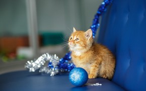 Picture cat, look, blue, kitty, background, sofa, new year, ball, baby, red, muzzle, cute, kitty, tinsel, …