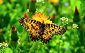 Wallpaper Macro, Butterfly, Macro, Butterfly
