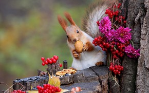 Picture flowers, nature, berries, animal, stump, protein, trunk, nuts, bunches, animal, rodent, Kalina, asters