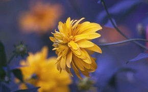 Picture macro, Rudbeckia dissected, Golden ball