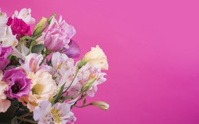 Picture flowers, background, pink, Lily, pink, flowers, lily
