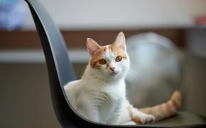 Picture cat, look, cat