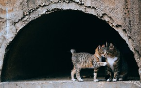 Picture look, cats, the dark background, kitty, grey, street, cute, baby, arch, the tunnel, weasel, grey, …
