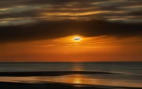 Picture sea, sunset, bird, shore