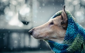 Picture each, dog, scarf