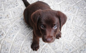 Picture dog, muzzle, puppy, sitting
