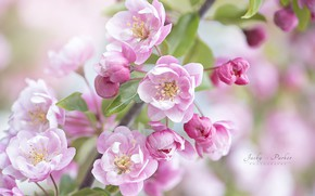 Picture branch, spring, flowering, Jacky Parker