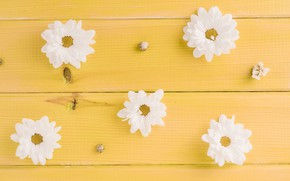 Picture flowers, white, buds, yellow background, yellow, wood, flowers