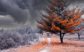 Picture nature, tree, color
