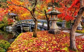 Picture autumn, leaves, trees, Park, colorful, Japan, Japan, maple, Kyoto, landscape, bridge, park, autumn, leaves, tree, …