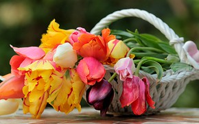 Picture flowers, basket, spring, tulips, vase