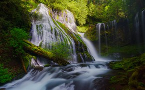 Picture trees, waterfall, moss, stream
