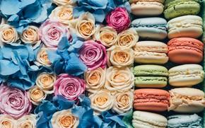 Picture roses, cookies, buds, macaroon, korbka