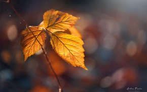 Picture autumn, leaves, bokeh, Andrаs Pаsztor