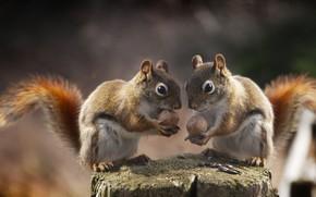 Picture stump, nuts, proteins, Andre Villeneuve