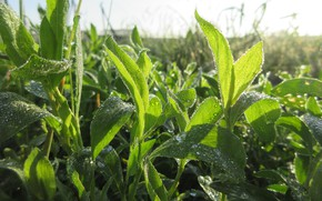 Picture Macro, Grass, Rosa, Morning, Mamala ©, Summer 2018, Spores