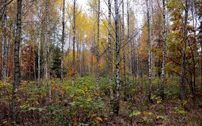 Picture autumn, forest, nature, mood