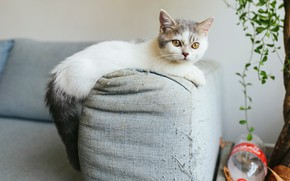 Picture cat, look, kitty, room, sofa, fabric, thread, scratching post, prankster, tightening, little brat